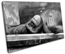 Chimpanzee Lazy funny Animals - 13-0027(00B)-SG32-LO